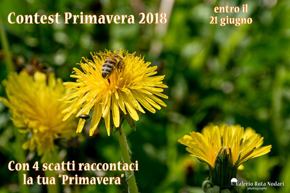 Contest Primavera 2018